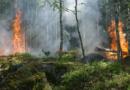 Trockenheit in Hessen: Brandgefahr im Wald und auf Feldern