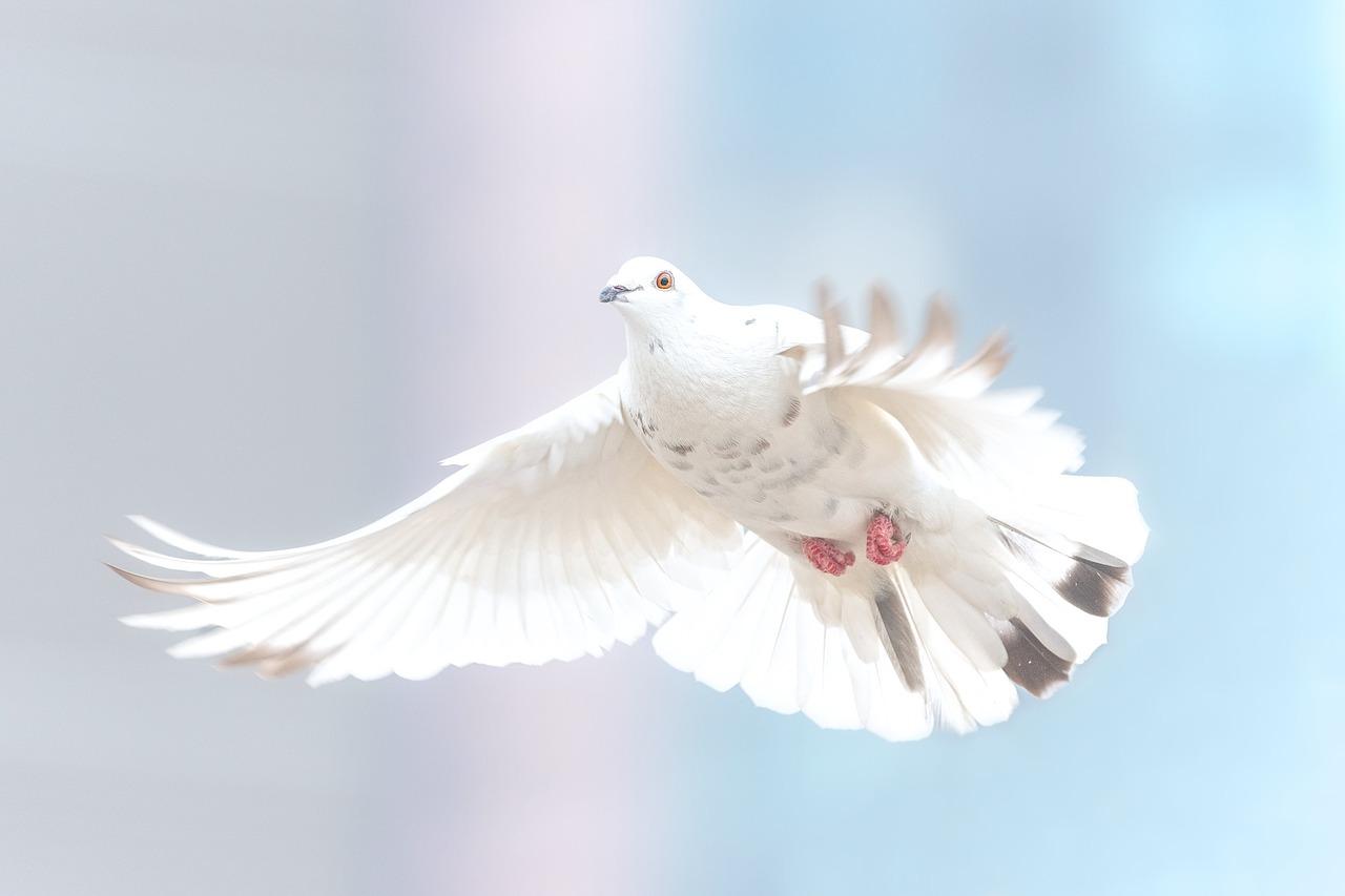 Bürgermeister für den Frieden: Rund 20 Städte machen mit