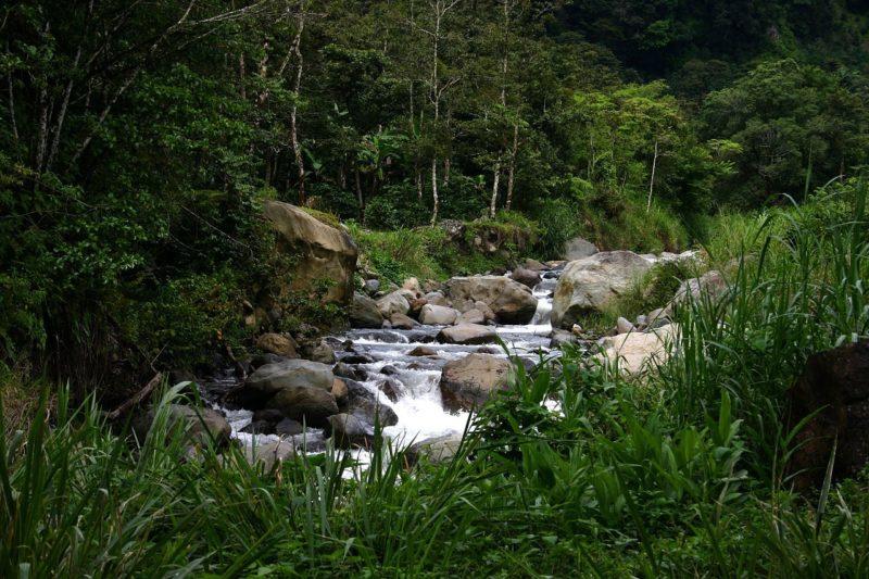 Mehr Bestandsvorsorge und Waldschutz