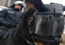 222 Hunde und 16 Pferde stehen im Dienst der Polizei
