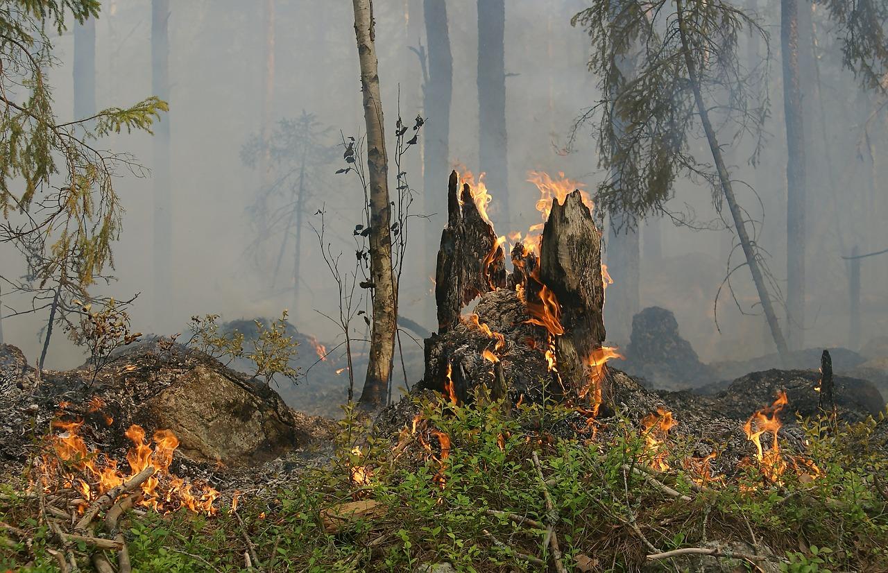 Hitzewelle: Kassel verbietet offene Feuer in Parks