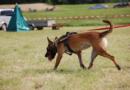 Spürhunde suchen Donnerstag nach Leichenteilen an Bahngleis
