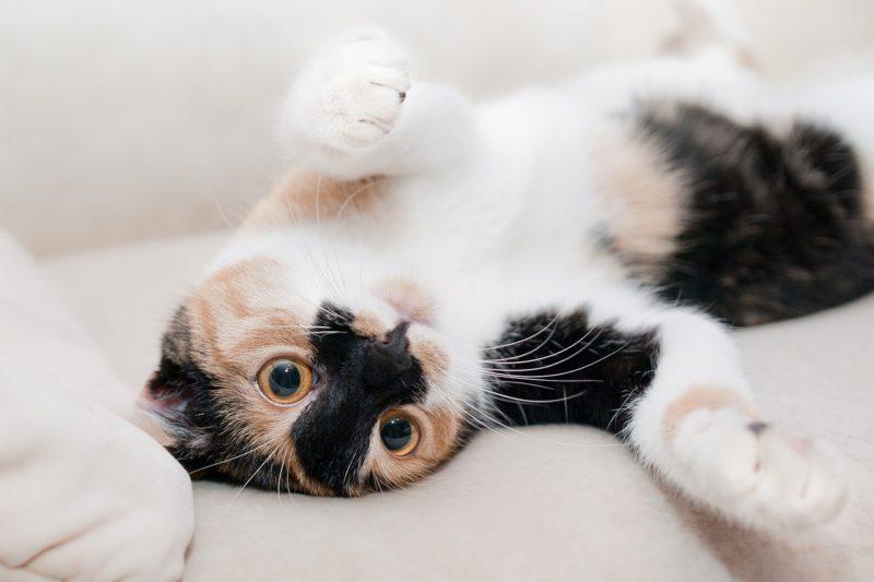 Stadt Kassel erlässt Katzenschutzverordnung