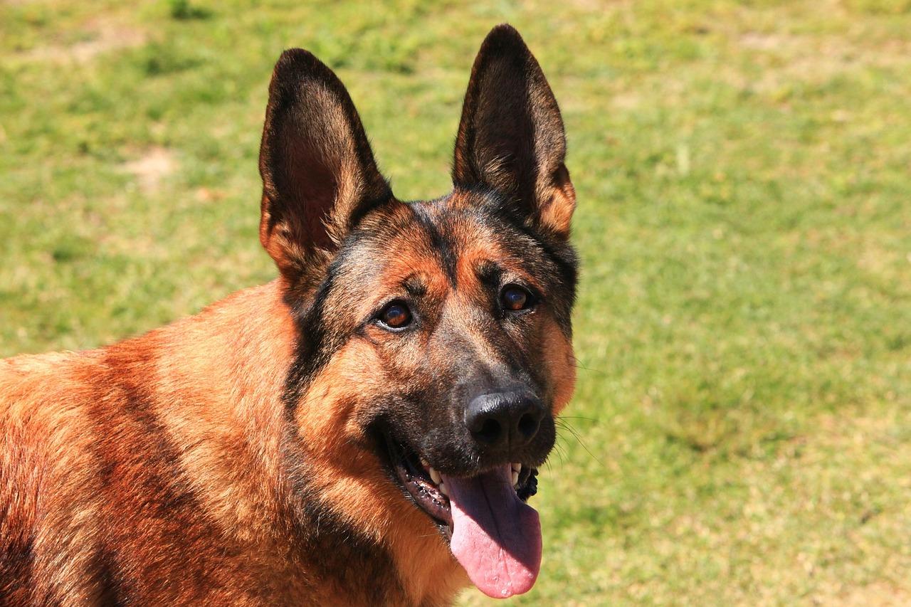 Schuss aus Fenster: Diensthund findet versteckte Waffe