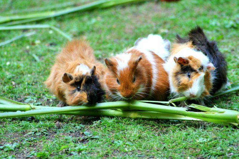 PETAs Tipps für die Kleintieraußenhaltung im Winter: So kommen Kaninchen und Meerschweinchen gut durch die kalten Monate
