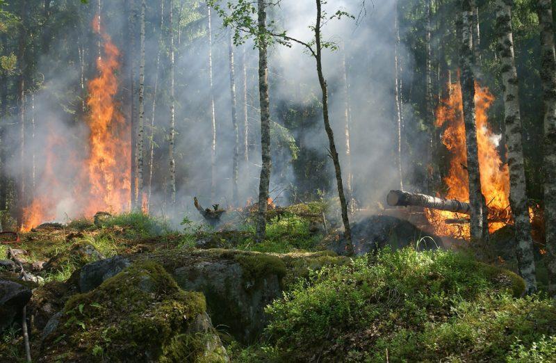 Erhöhtes Waldbrand Risiko zu Ostern