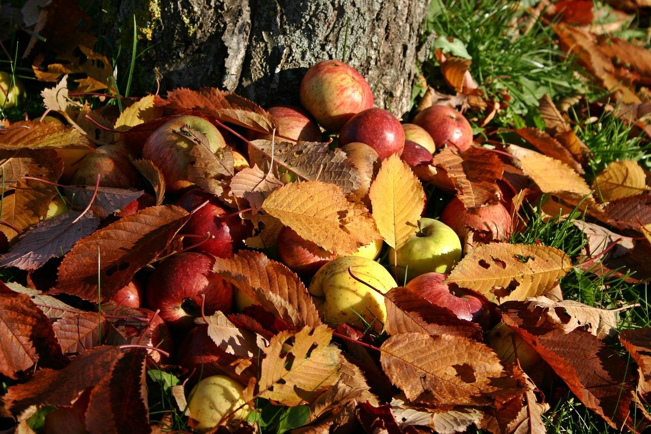 NABU: Baumschnitt, Laub und Fallobst im Garten lassen