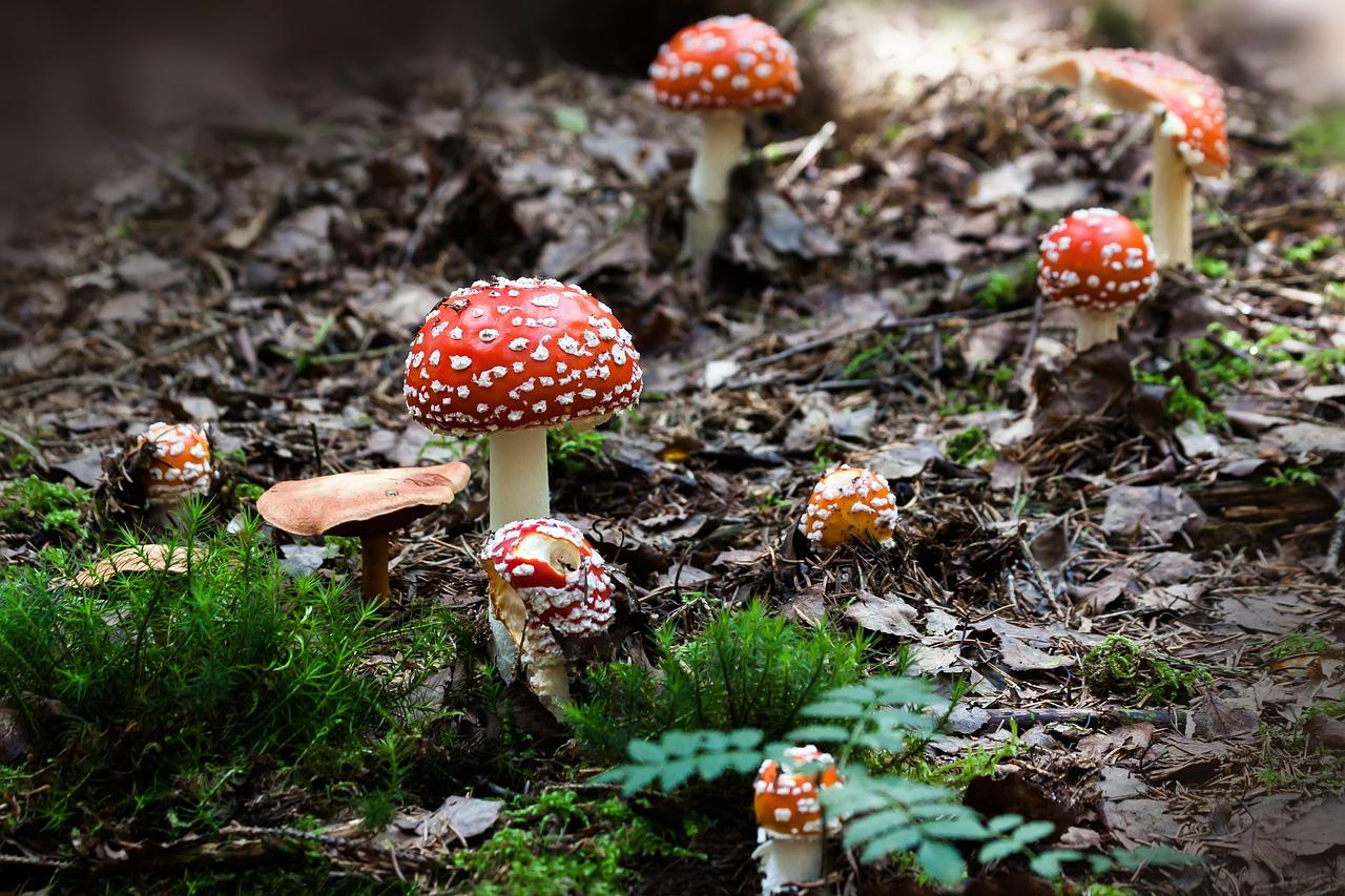 Pilze sammeln kann teuer werden