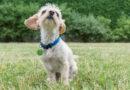 Heute ist Welthundetag :Kennzeichnen und Registrieren muss Pflicht werden