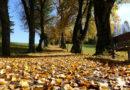 Gartenwege werden im Herbst zu Rutschbahnen