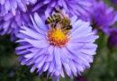 Mehr Lebensraum für Bienen