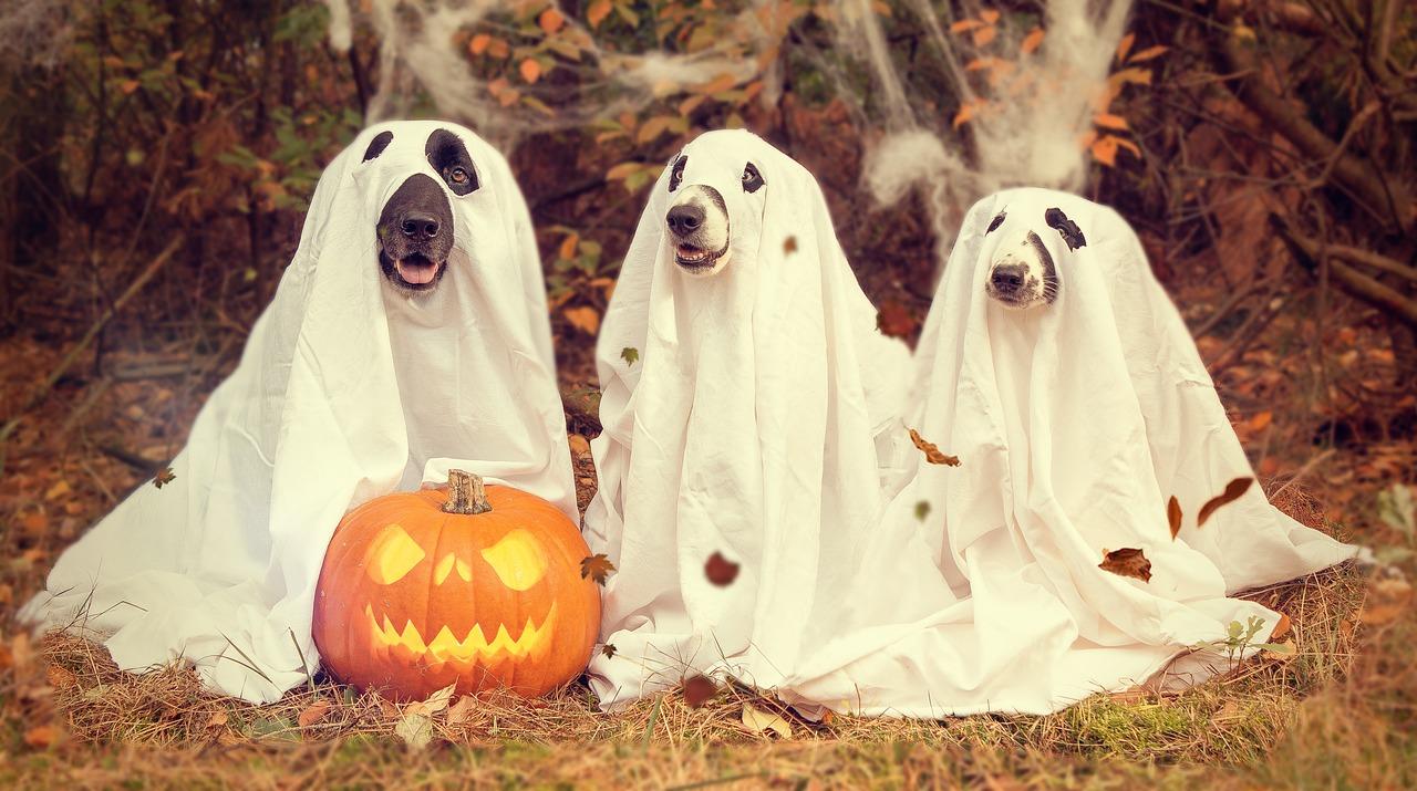 Halloweenstreiche: nicht immer harmlos
