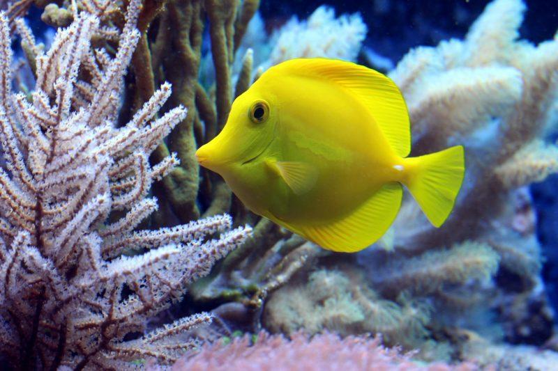 Dramatische Korallenbleiche im Great Barrier Reef