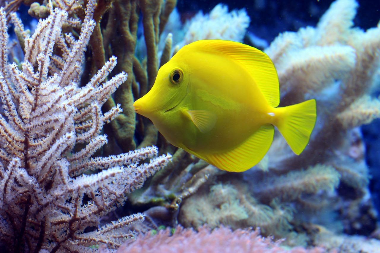 Schutz der Meere und Korallenriffe: Deutschland unterstützt Indonesien bei Errichtung und Erhaltung mariner Schutz- und Fischereizonen