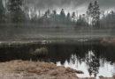 Umweltministerium stellt für Moorrenaturierung im Burgwald 50.000 Euro bereit