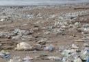 NABU: EU will steigende Einweg-Müllberge endlich reduzieren