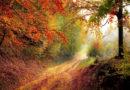 Mehr Naturwälder für Mensch und Natur