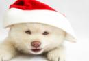 Keine Tiere unterm Baum! – TASSO warnt davor, Vierbeiner zu verschenken