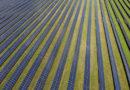 Energiewende: Bündnis warnt vor Einbruch des Solarausbaus