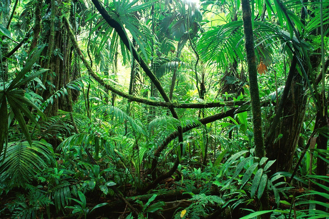 Kein Palmöl für Biodiesel!