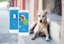 Die App feed a dog füttert Fellnasen im Tierheim Stuttgart