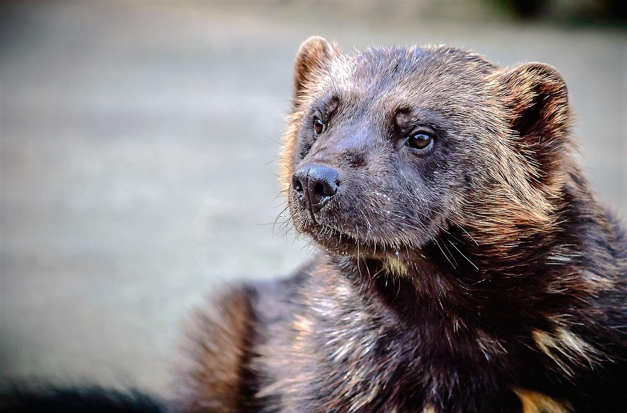 Wenn es auf dem Dachboden poltert: PETA gibt Tipps für den tierfreundlichen Umgang mit Mardern