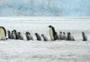 WWF – Schutzgebiet im antarktischen Weddellmeer gescheitert