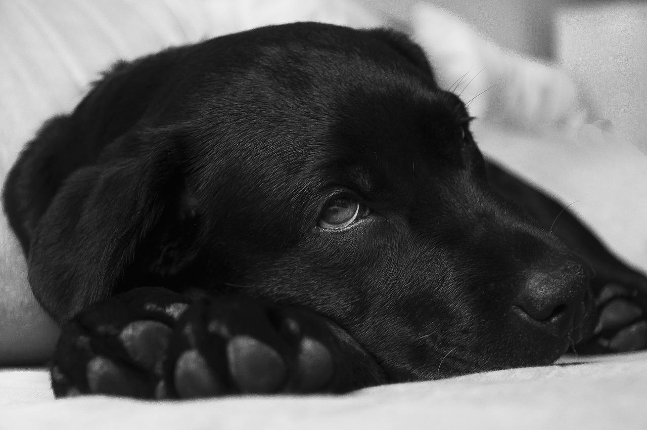 Tieren auf keinen Fall Medikamente aus der Hausapotheke geben