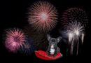 Mitgefühl statt Feuerwerk: PETA-Expertin gibt Tipps, wie tierische Mitbewohner die Silvesternacht möglichst stressfrei überstehen