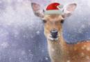 Tierweihnacht am 24. Dezember im Tierpark Sababurg