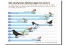 NABU ruft zur Wintervogelzählung auf