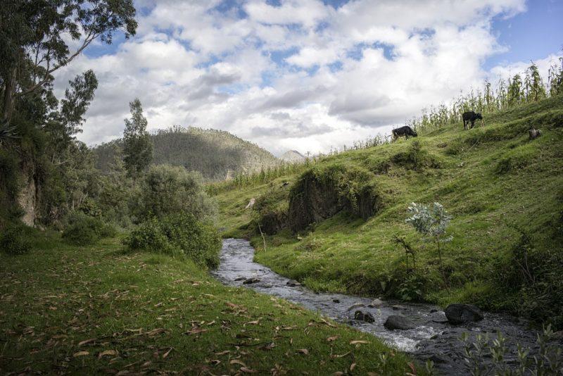 Bäche in Hessen werden wieder wild, natürlich und artenreich