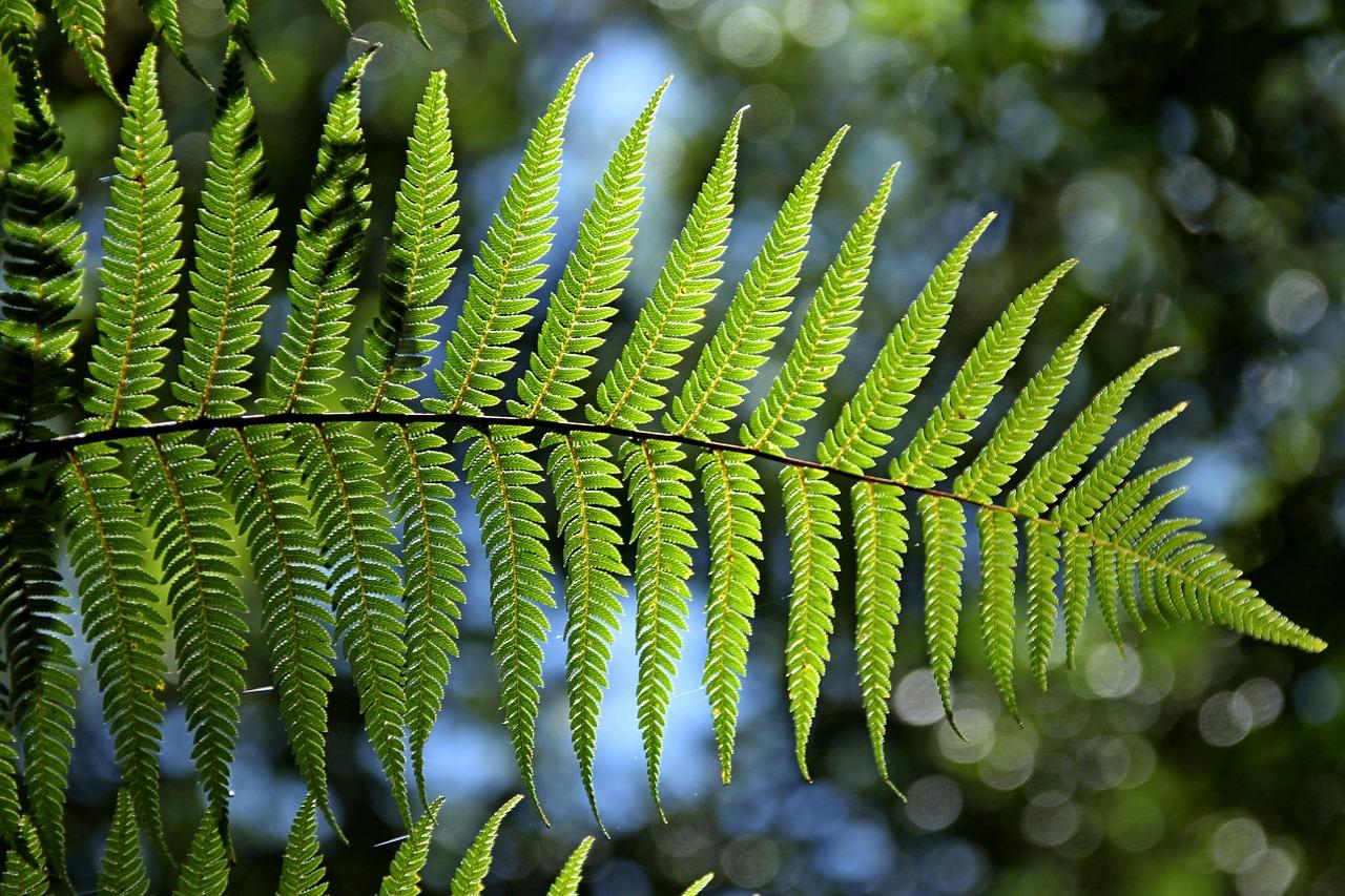 NABU-Kommentar zur Roten Liste heimischer Wildpflanzen