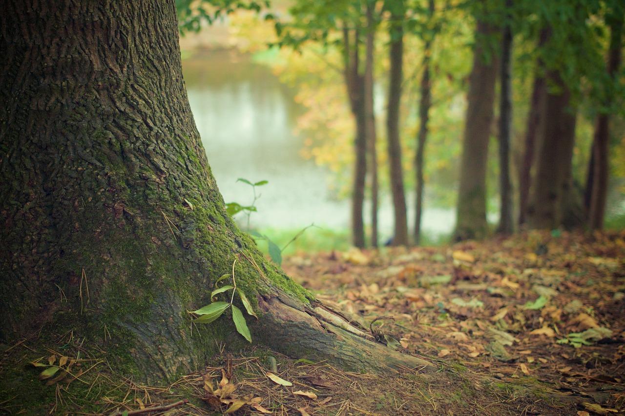 NABU – Natur ist wichtiger als Holz – Deutsche wollen mehr staatlichen Schutz für den Wald