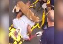 Der beste Freund des Menschen: Hund kuschelt verletztes Herrchen auf Patiententrage