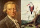 Ein Universalgelehrter des 18. Jahrhunderts