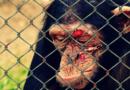 Koalitionsvertrag: Kein großer Wurf beim Tierschutz