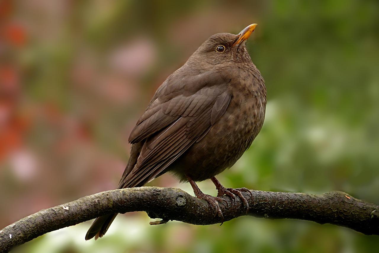 NABU: Spatz in Führung, Waldvögel machen sich rar