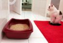 Die richtige Katzentoilette: Standort, Größe, Sauberkeit – PETA-Expertin gibt Tipps