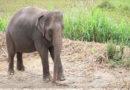 """""""Zombie-Gen"""": Deshalb bekommen Elefanten keinen Krebs"""