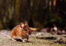 Mäusebiss am Auto: Versicherung haftet für Schäden
