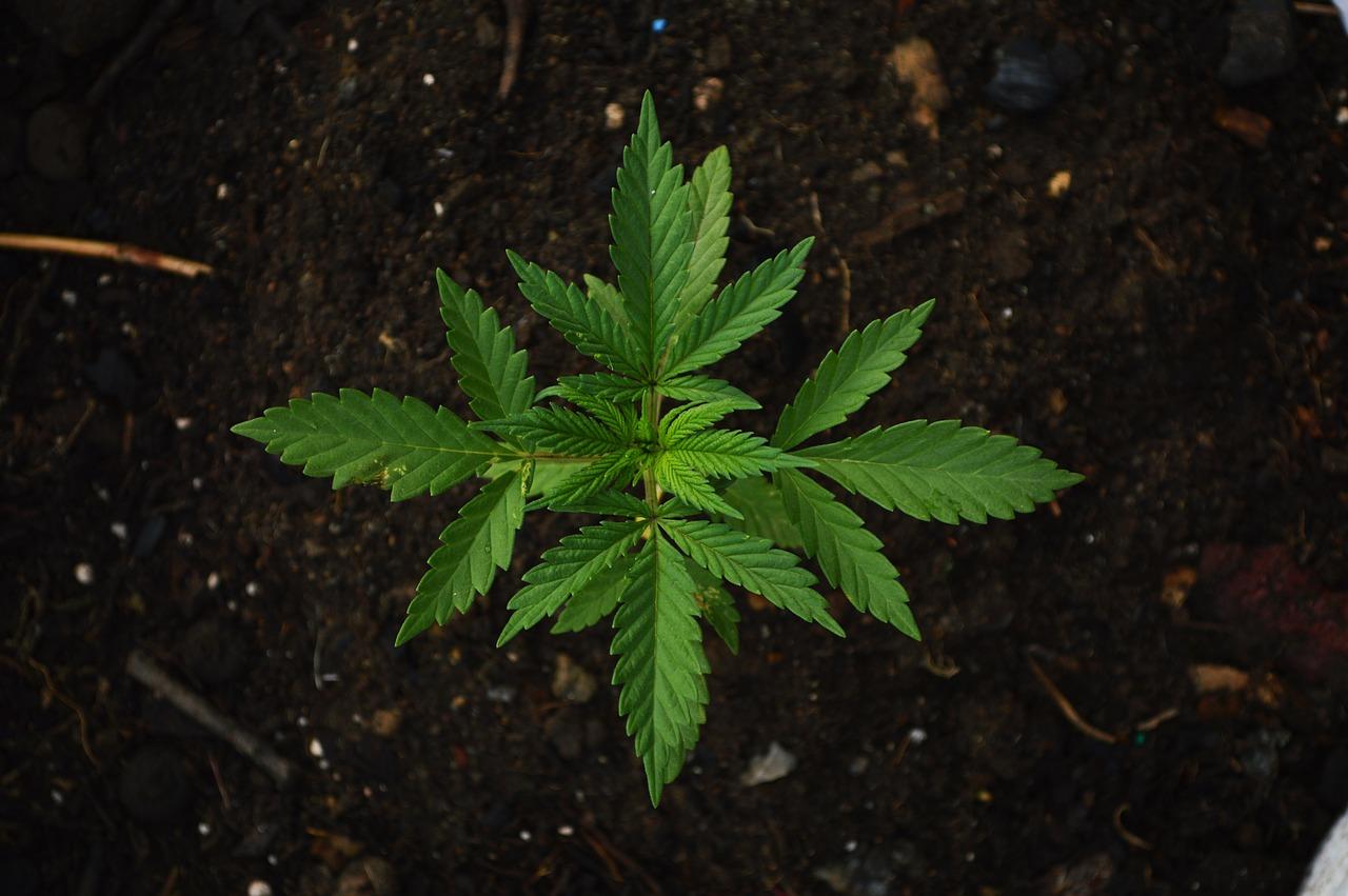 Kassel: Drogenfahrt unterbunden und Marihuana sichergestellt