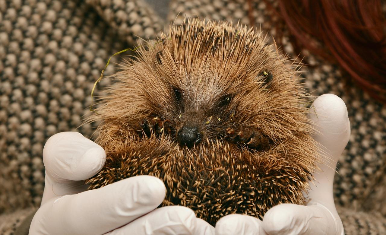 Deutsche Wildtier Stiftung: Bitte Rücksicht bei der Garten- und Balkonarbeit nehmen – viele Tiere schlummern noch oder befinden sich in der Aufwachphase