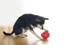 Spielen mit dem Hund – aber richtig: PETA-Expertin gibt Tipps, um Gefahren zu vermeiden