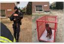"""PETA deckt gemeinsam mit """"hundkatzemaus"""" illegalen Handel mit verstümmelten Welpen in Sachsen-Anhalt auf"""