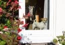 Neuer FINDEFIX-Spot zeigt, wie man sein Haustier schützen kann