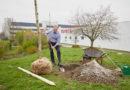 Toyota bringt alte deutsche Baumsorten zurück