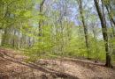 Warum der hessische Artenschutz Europa braucht