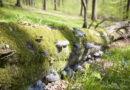 NABU: Waldnaturschutz und Klimaschutz zusammen denken