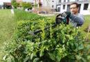 Gartenarbeit verursacht Rückenschmerzen Nicht mit den Tipps der Aktion Gesunder Rücken e. V.